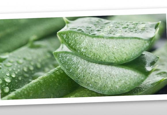 Looking after your skin with Aloe Vera